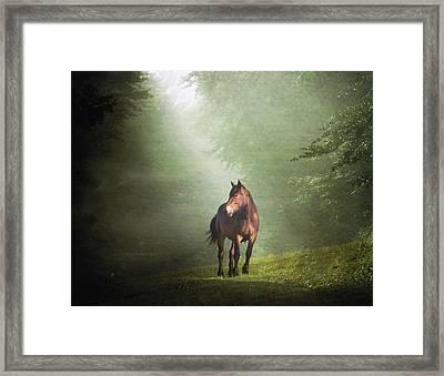 Solitary Horse Framed Print by Christiana Stawski