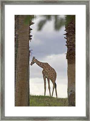 Solitary Framed Print by Molly Heng