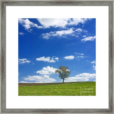 Solitary Tree In Green Meadow Framed Print by Bernard Jaubert