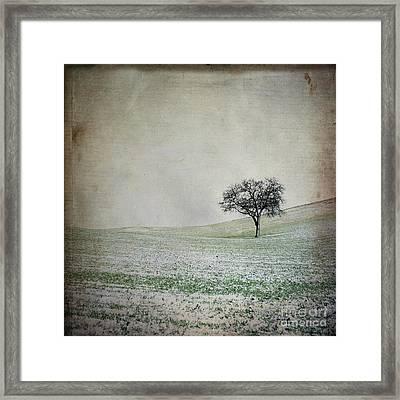 Solitary Tree In Winter. Auvergne. France. Europe Framed Print by Bernard Jaubert