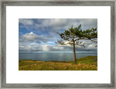 Solitude Framed Print by Dan Mihai