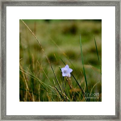 Solo Framed Print by Isabella Abbie Shores
