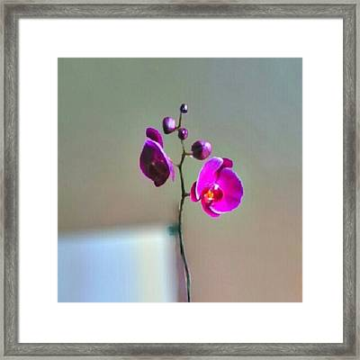 Some #flowers That Were Sent To My Wife Framed Print by Kel Hill