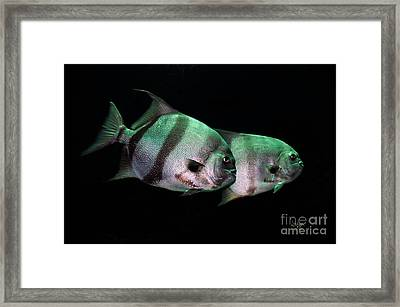 Something Fishy This Way Comes Framed Print by Lois Bryan