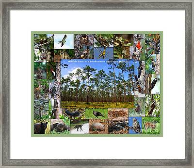 Southeastern Pine Forest Wildlife Poster Framed Print by Barbara Bowen