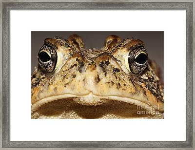 Southern Toad Close Up Framed Print by Lynda Dawson-Youngclaus