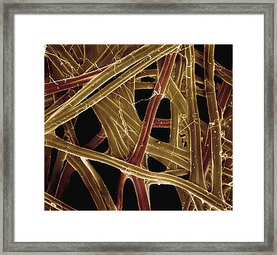 Spanish Moon Moth Cocoon Fibers 105x Framed Print by Albert Lleal