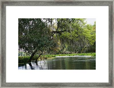 Spanish Moss Fills Tree Branches Framed Print by Raymond Gehman