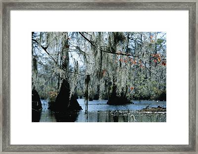 Spanish Moss Hanging From The Branches Framed Print by Raymond Gehman