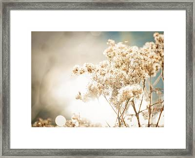 Sparkly Weeds Framed Print by Cheryl Baxter