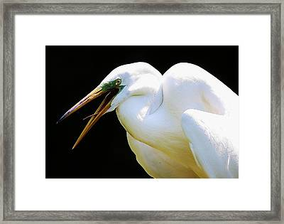 Speak To Me Framed Print by Paulette Thomas