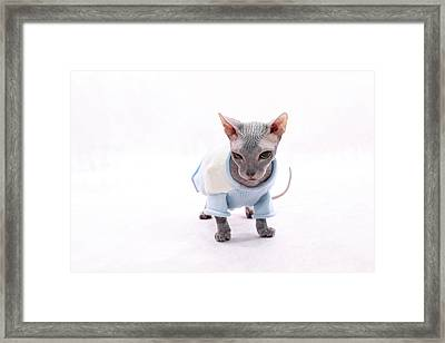 Sphynx Hairless Cat. Framed Print by With love of photography