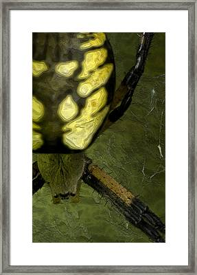 Spider Framed Print by Jack Zulli
