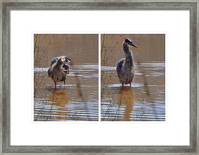 Spin And Fluff Dry Heron - C3219d Framed Print by Paul Lyndon Phillips