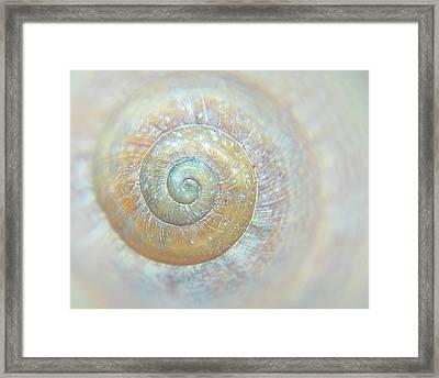 Spiral Shell Galaxy Framed Print by Darkmatterphotography