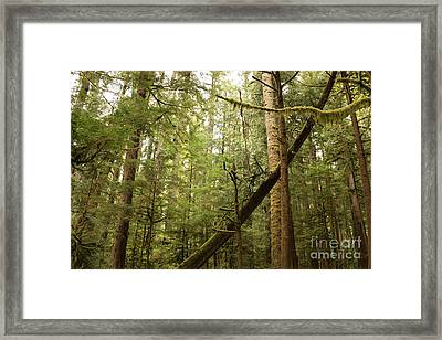 Spirit Of The Pacific Northwest Framed Print by Carol Groenen