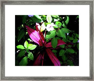 Splash Of Nature Framed Print by Charles Carlos Odom