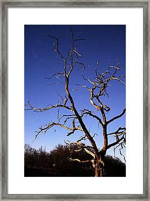 Spooky Tree Framed Print by Larry Ricker