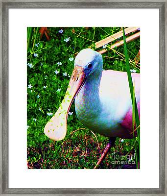 Spoonbill Number One Framed Print by Doris Wood