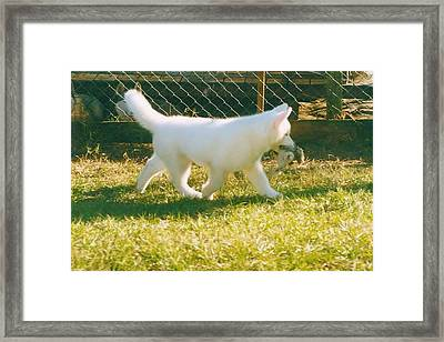 Spot Trot Framed Print by Lynda Dawson-Youngclaus