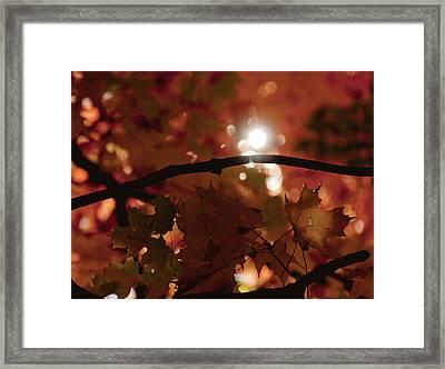 Spotlight On Fall Framed Print by Cheryl Baxter