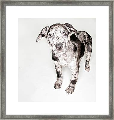 Spotted Puppy Framed Print by Chad Latta