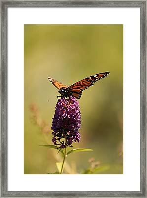 Spread Your Wings And Fly Framed Print by Angie Tirado