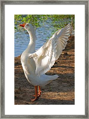 Spread Your Wings Framed Print by Lisa Phillips