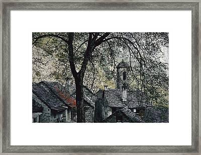 Spreading Chestnut Tree Appears Framed Print by Thomas J. Abercrombie