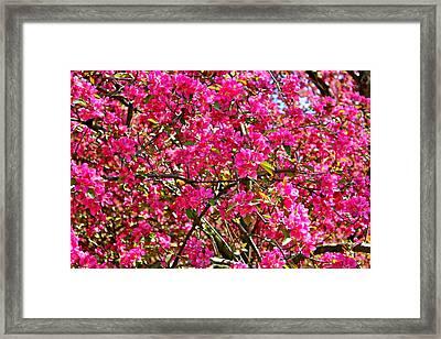 Spring Blossom Framed Print by Felix Zapata