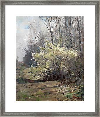 Spring Blossom  Framed Print by Ylli Haruni