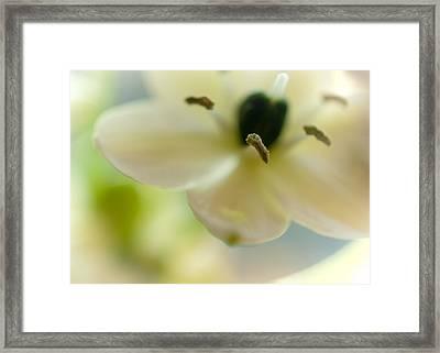 Spring Feeling Framed Print by Jenny Rainbow