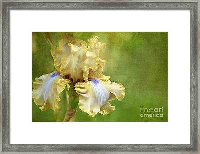 Spring Fling Framed Print by Beve Brown-Clark Photography