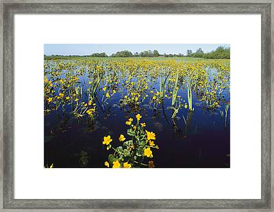 Spring Flood Plains With Wildflowers Framed Print by Norbert Rosing
