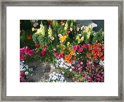 Spring Flower Garden Framed Print by Mary M Collins