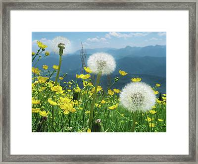 Spring Flower Meadow With Mountain Framed Print by Fresh, amazing pictures make people look!