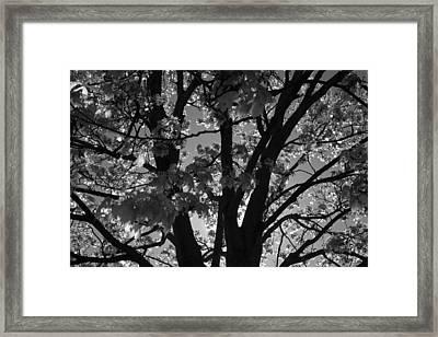 Spring Forth Framed Print by Lyle Hatch