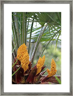 Spring Fruit Framed Print by Suzanne Gaff