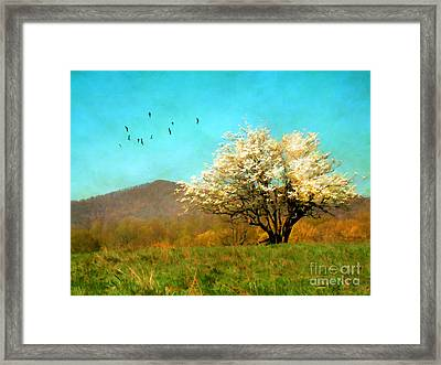 Spring In The Mountains Framed Print by Darren Fisher