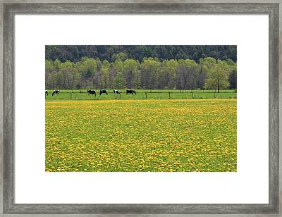 Spring Meadow Flowers Framed Print by John Stephens