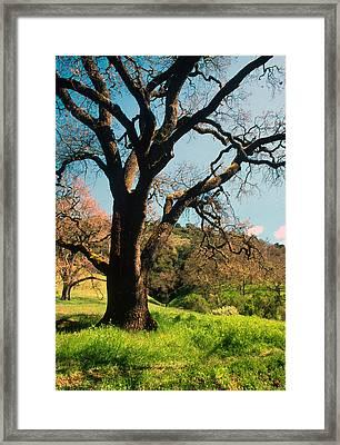 Spring Oak Framed Print by Kathy Yates