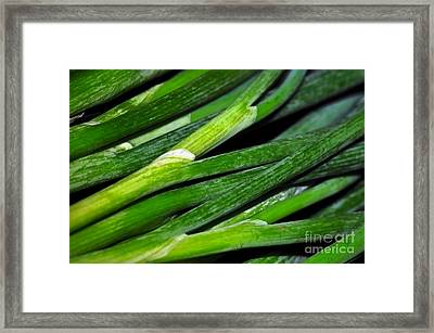 Spring Onions 2 Framed Print by Kaye Menner