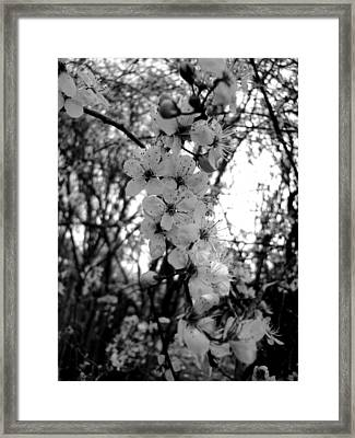 Spring Framed Print by Roberto Alamino