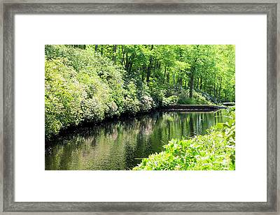 Spring Stream Framed Print by Sara Walsh