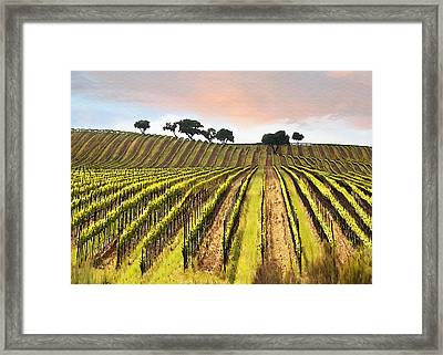 Spring Vineyard Framed Print by Sharon Foster