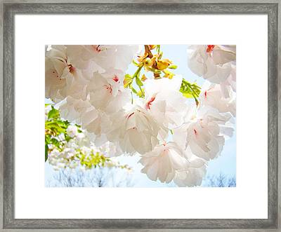 Spring White Pink Tree Flower Blossoms Framed Print by Baslee Troutman