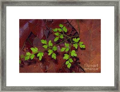 Spring Will Come Framed Print by Judi Bagwell