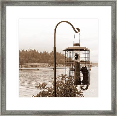 Squirrel In A Squirrel-proof Bird Feeder Framed Print by Tanya  Searcy