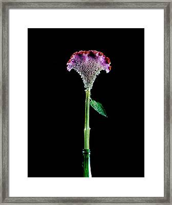 Squirting Feeling Framed Print by Marcio Faustino