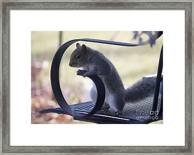 Sqwirl Framed Print by Robert E Alter Reflections of Infinity LLC